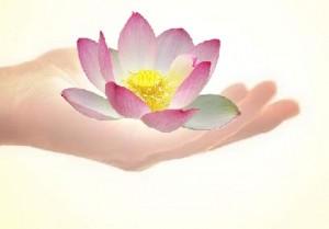main lotus